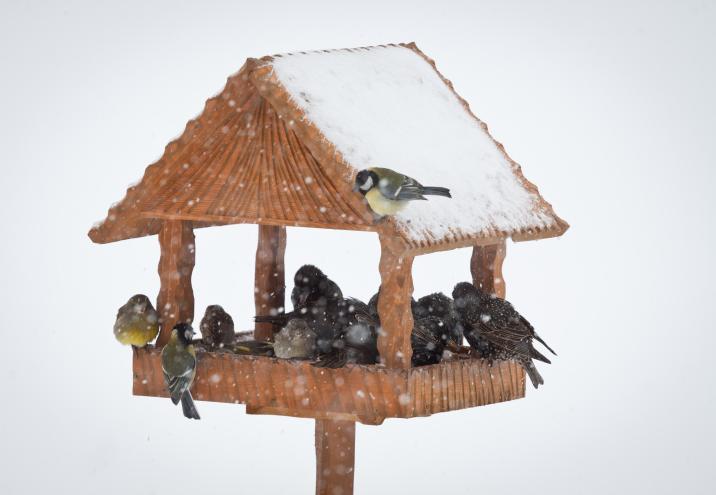 Ptaki Zimą Kilka Pomysłów Na Edukacyjne Zabawy Dla Dzieci