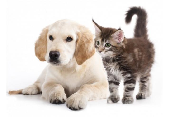 Zwierzę W Domu Pies Czy Kot Przeczytaj Artykuł